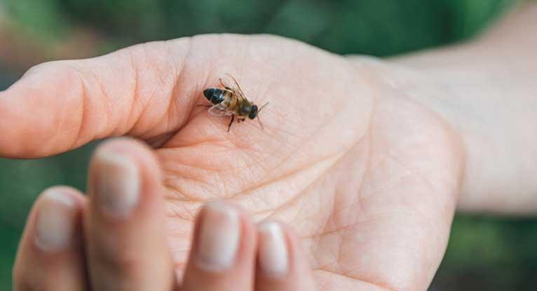 Giftige insectenbeten: wat te doen tegen bijen- of wespensteken?