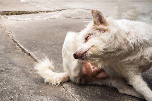 Atopie bij honden en katten: zo herken je het!